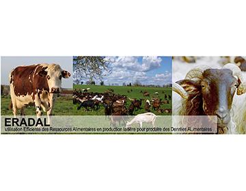 ERADAL : efficience des ressources alimentaires en systèmes laitiers